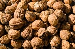 Freshly Harvested Walnuts stock photography