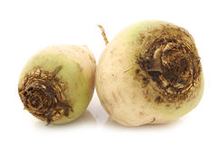 Freshly harvested white beets Stock Image