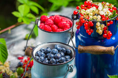 Freshly harvested wild berry fruits in summer Stock Photography