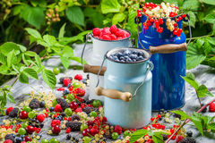 Freshly harvested wild berry fruits in summer Royalty Free Stock Photo