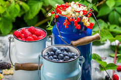 Freshly harvested wild berry fruits in summer Stock Images