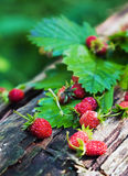 Freshly harvested wild strawberry on a stump Royalty Free Stock Photography