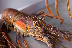 Freshly lobster Border. Close up photo of fresh lobster on the plate Stock Photography