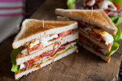 Freshly made clubsandwich stock image