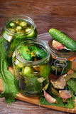 Freshly made pickled cucumbers in jars Royalty Free Stock Image