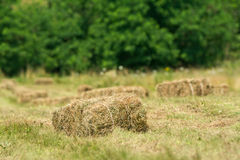Freshly made from straw bales Royalty Free Stock Photos