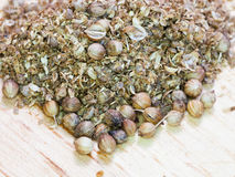Freshly milled and dried coriander seeds Stock Photography