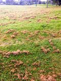 Freshly mowed grass clumps stock photo