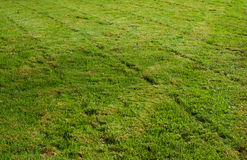 Freshly mowed grass transverse Stock Photography