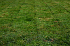 Freshly mowed grass vertical Royalty Free Stock Images