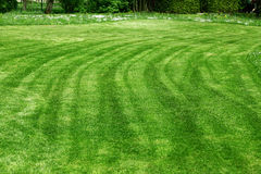 Freshly mowed lawn. With white flowers in the background Stock Photo