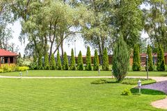 Freshly mowed rows of green lawn at country residence with summerhouse. Hedge of fresh cedars. Landscape design and