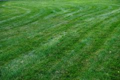 Freshly mown grass Stock Photography