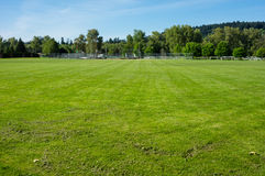 Freshly mown grass or turf Stock Photography