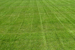 Freshly mown grass or turf Stock Images