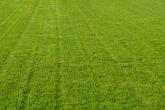 Freshly mown grass or turf Royalty Free Stock Images