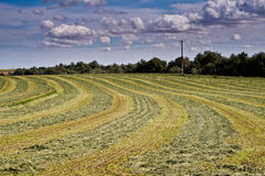Freshly mown hay under dramatic sky Royalty Free Stock Photography