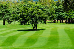 Freshly mown lawn and trees in a golf course Stock Images
