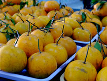 Freshly oranges Stock Photography