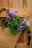 Freshly picked. Lilacs hanging in a wicker satchel royalty free stock image
