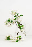 Freshly picked apple flowers stock images