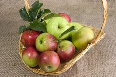 Freshly picked apples. Apples in a basket on hessian Royalty Free Stock Photography