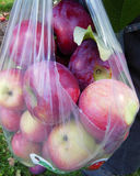 Freshly picked apples Royalty Free Stock Image