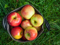 Freshly picked apples Royalty Free Stock Photo