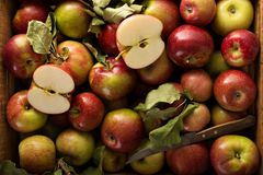 Freshly picked apples in a wooden crate. Overhead shot Royalty Free Stock Photos