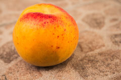 Freshly picked apricot on background royalty free stock photo
