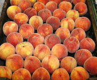 Freshly picked apricots on market Royalty Free Stock Photos