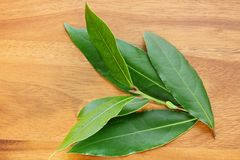 Freshly picked Bay leaves Royalty Free Stock Images