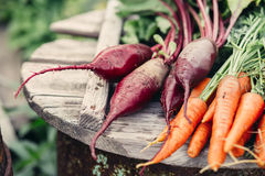 Freshly Picked Beetroot and Carrots. Royalty Free Stock Photography