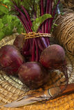 Freshly Picked Beetroot Stock Images