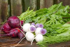 Freshly picked beets, turnips, herbs and leafy greens on an old. Freshly picked red beets, white turnips and purple chives with greens and herbs on an old wooden Stock Image