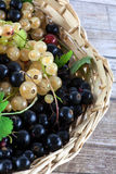 Grapes in basket Stock Images