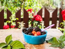 Freshly picked berries ready for eating Stock Photo