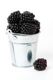 Freshly Picked Blackberries Stock Image