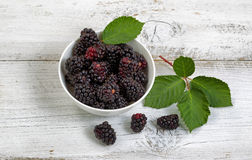 Freshly picked blackberries on rustic white wooden boards Royalty Free Stock Images
