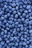 Freshly picked blueberries Stock Images