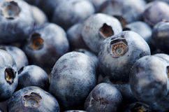 Freshly picked blueberries background Royalty Free Stock Photos
