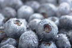 Freshly picked blueberries background Stock Photo