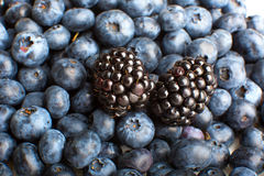 Freshly picked blueberries and blackberries close-up Stock Photos