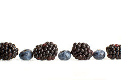 Freshly picked blueberries and blackberries close-up Stock Photography