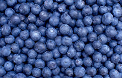 Freshly picked blueberries Stock Photos