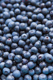Freshly picked blueberries Royalty Free Stock Photos
