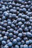 Freshly picked blueberries. Dark bue Royalty Free Stock Photos
