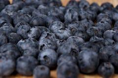 Freshly picked blueberries Stock Photos
