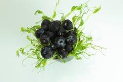 Freshly picked blueberries illustration stock photography
