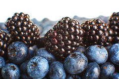Freshly picked blueberries. Royalty Free Stock Image